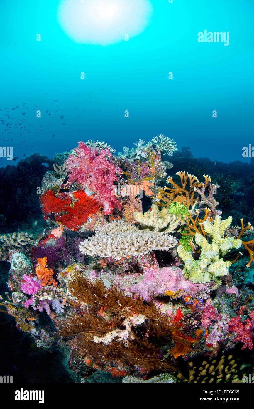 Una colorata tropical Coral reef contro un blu sullo sfondo di acqua con pesce in bilico la barriera corallina. Immagini Stock