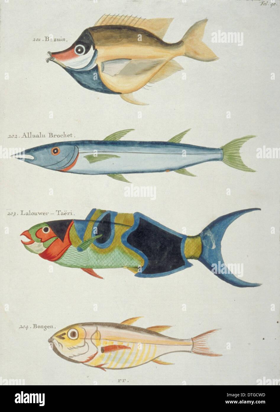 Illustrazione colorata di quattro pesci Immagini Stock