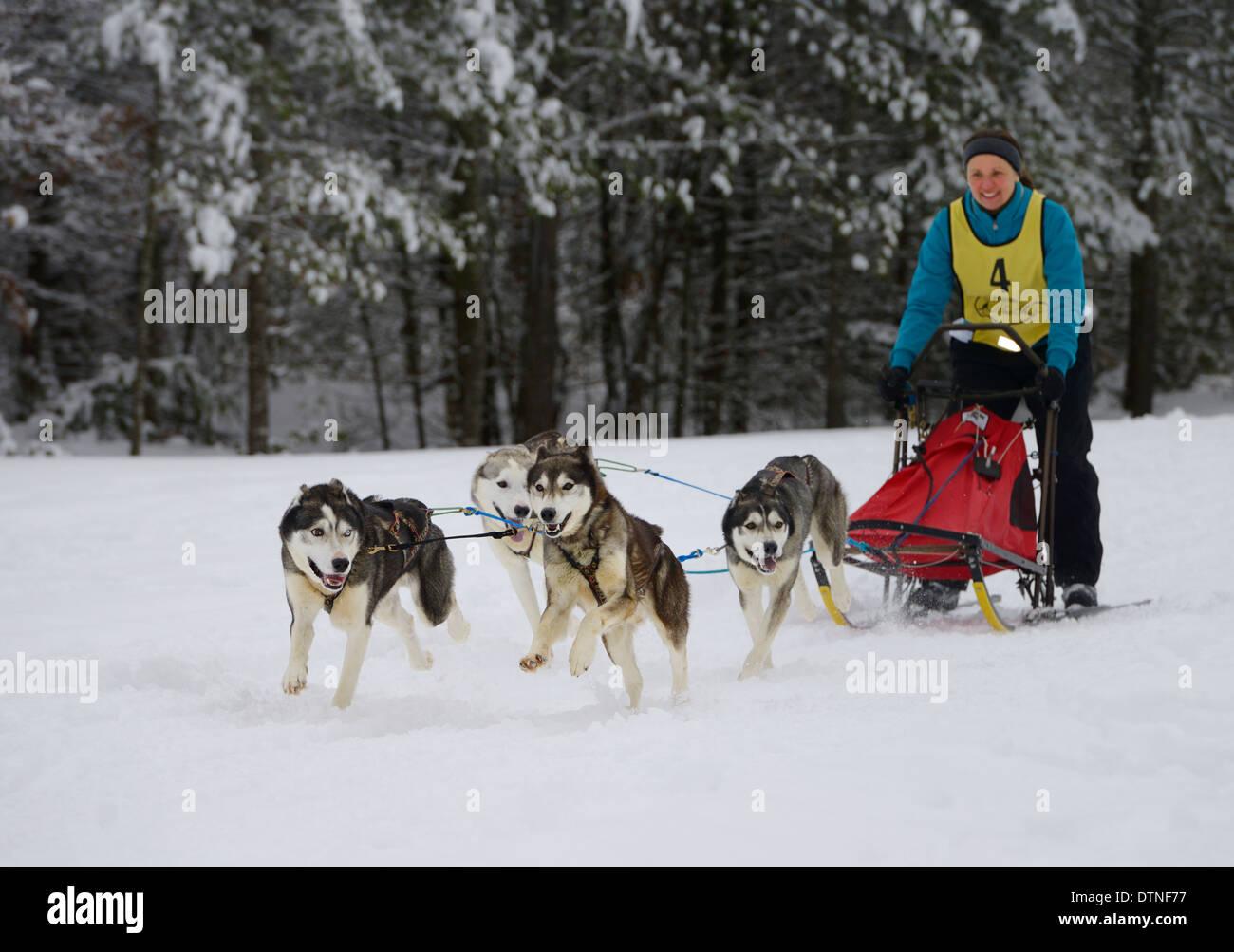 Femmina con musher huskies passando boschi innevati su quattro corsa di cani da slitta a eventi marmora snofest ontario Immagini Stock