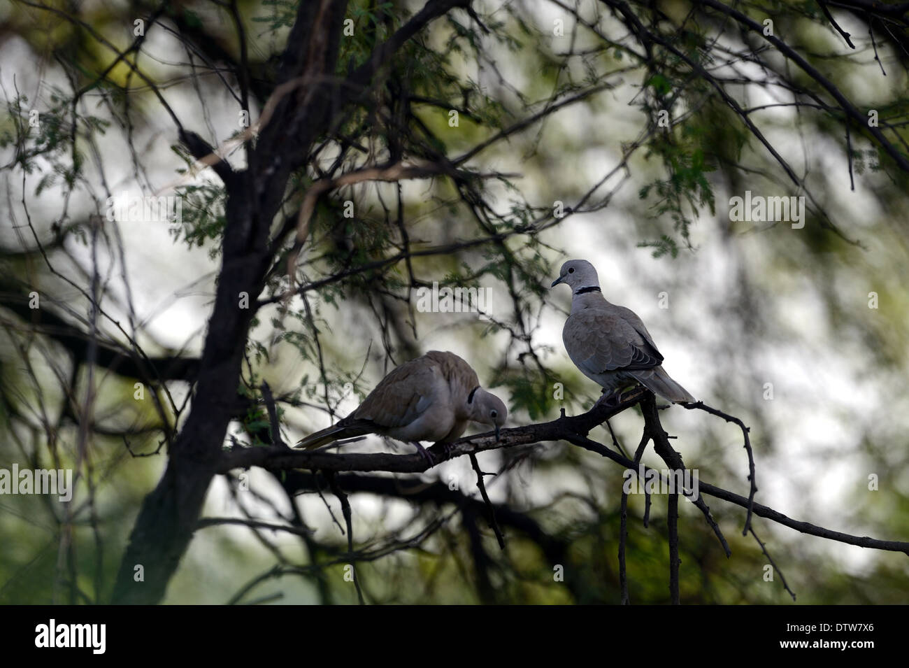 Sultanpur Bird Sanctuary, Gurgaon, Haryana, India Immagini Stock