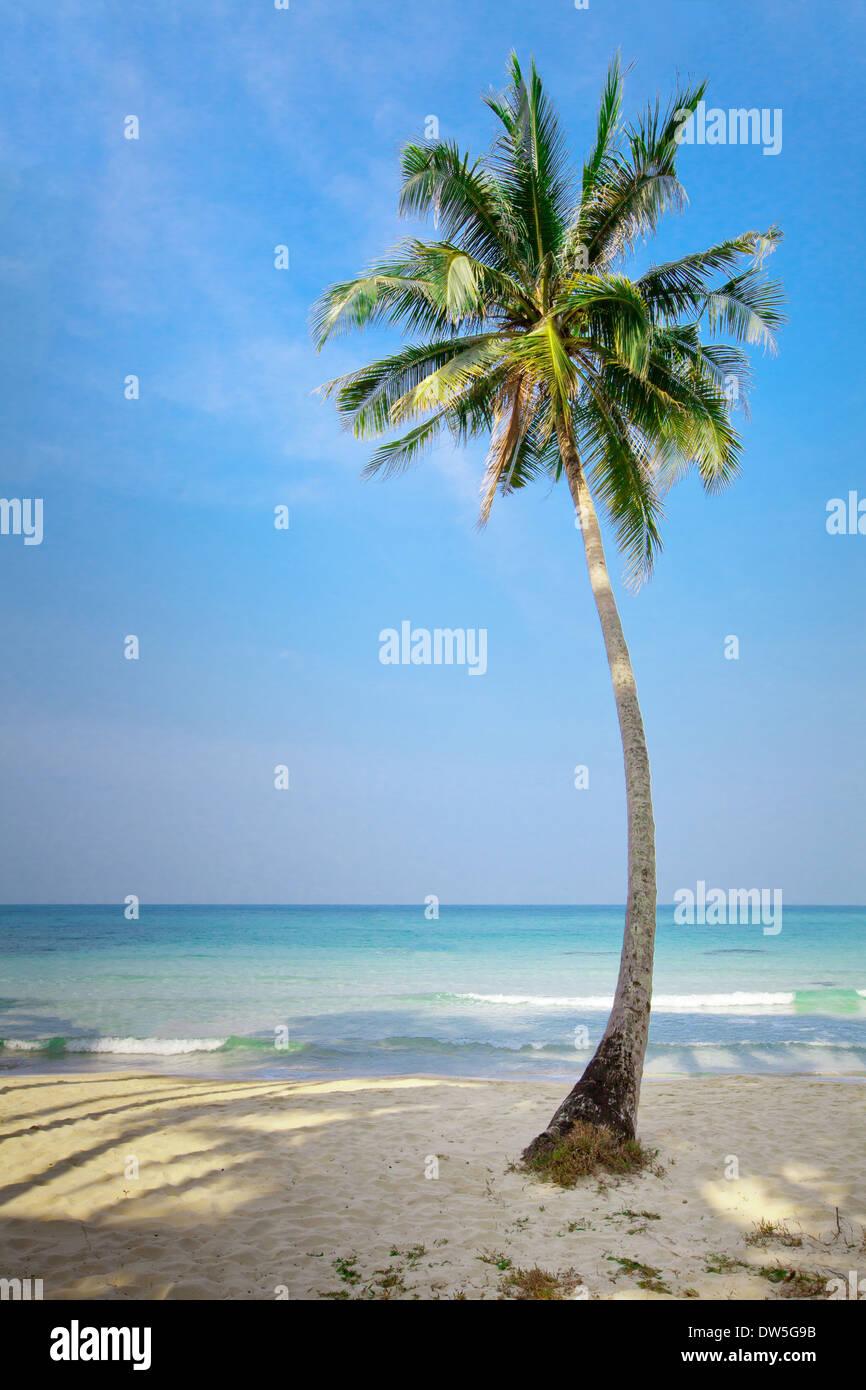 Bella lonely Palm Tree sulla spiaggia Immagini Stock