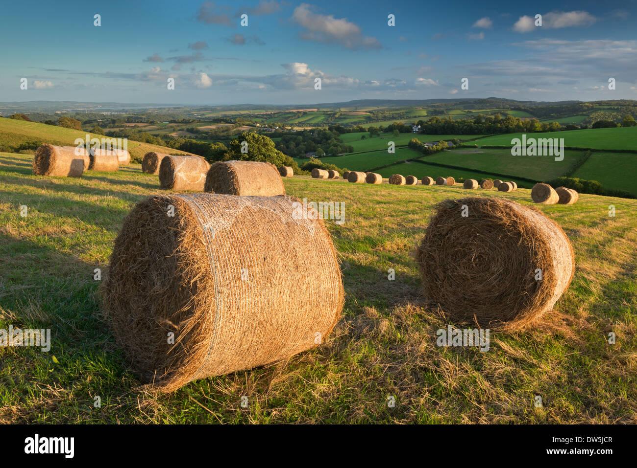 Balle di fieno in campi di rotolamento della metà nel Devon, in Inghilterra. In autunno (settembre 2012). Immagini Stock