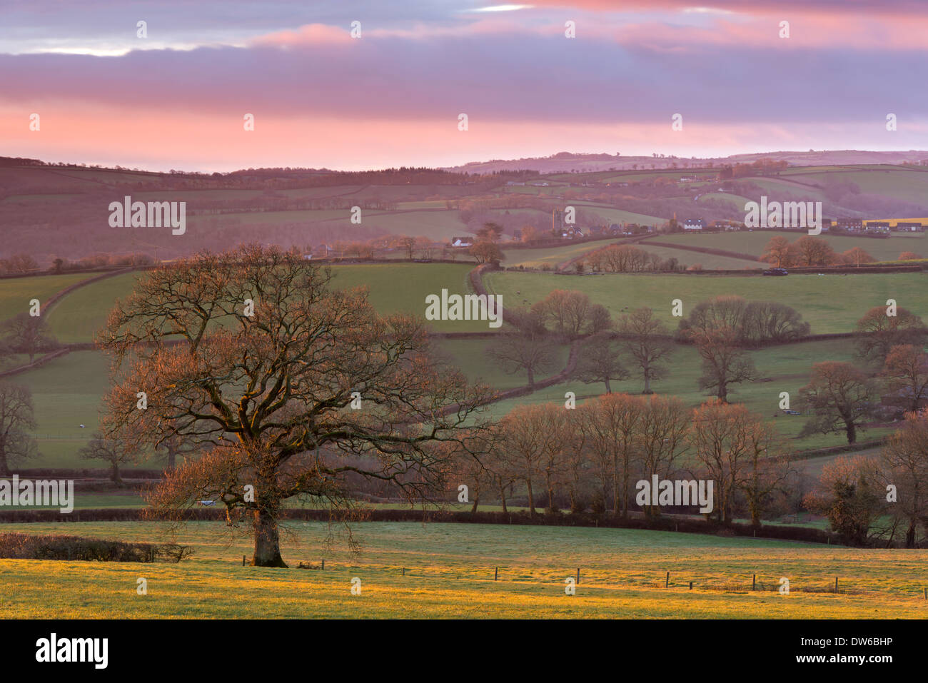 La mattina presto il sole d'inverno sulle ondulate Devon campagna, Devon, Inghilterra. Inverno (febbraio) 2014. Immagini Stock