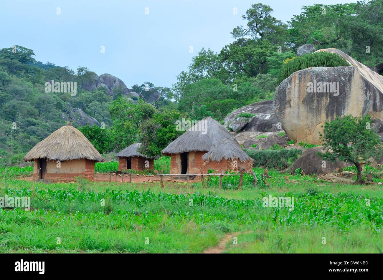 Altipiani orientali dello Zimbabwe in estate con luminosi colori verde e montuoso habitat. I campi di mais e le tradizionali capanne. Immagini Stock