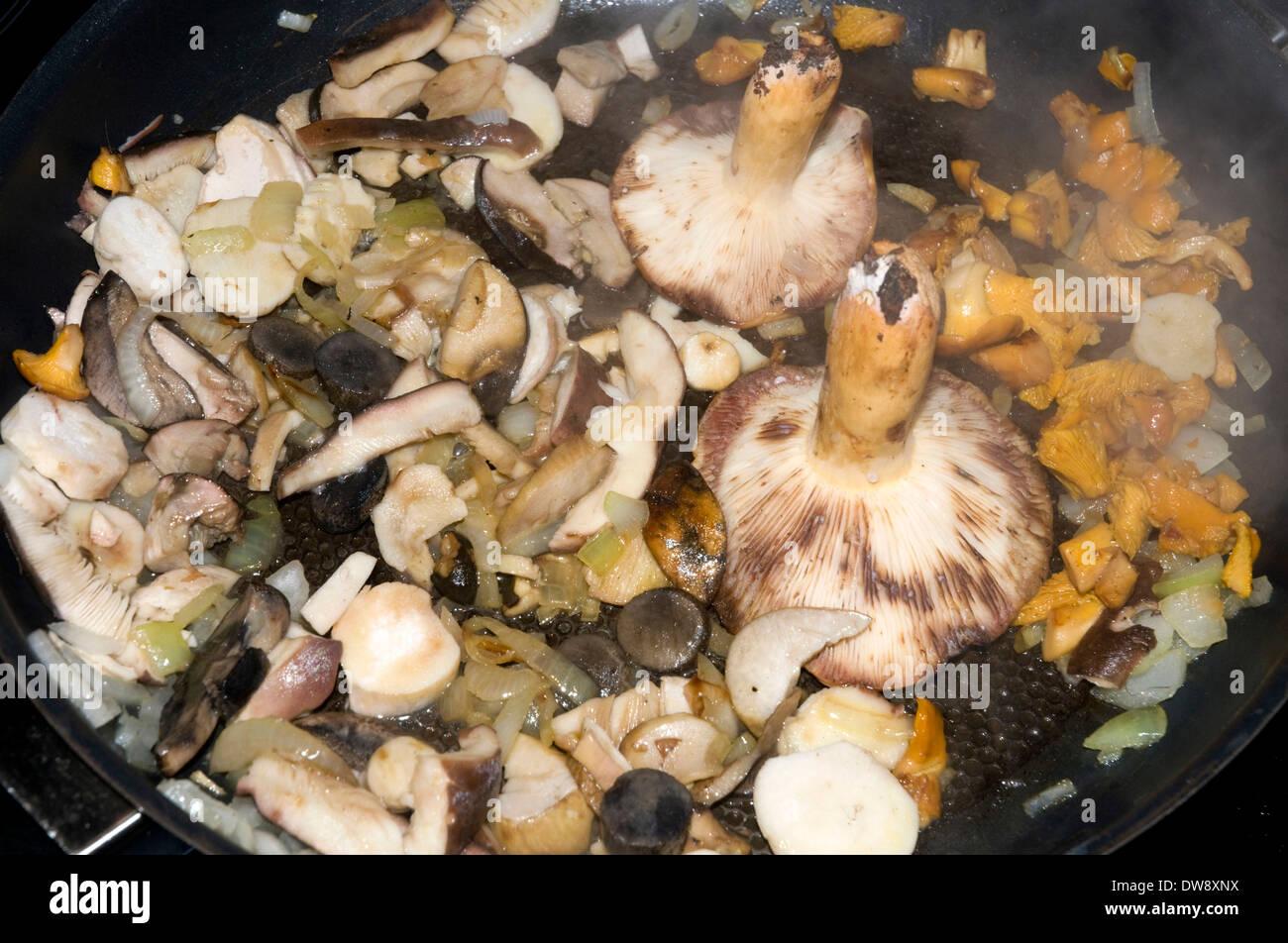 I funghi in padella Immagini Stock
