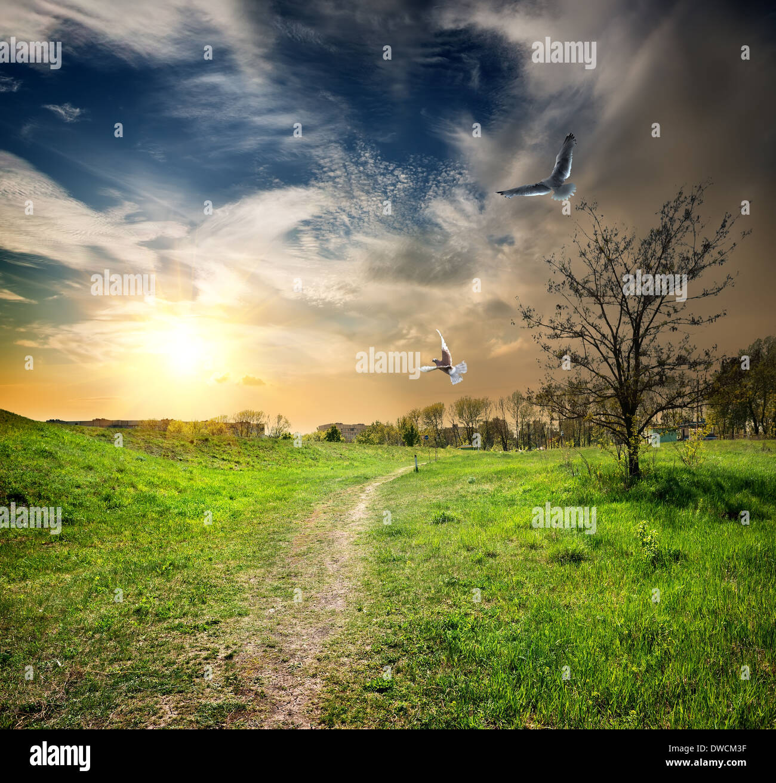 Strada di campagna e di uccelli nel crepuscolo del giorno Immagini Stock