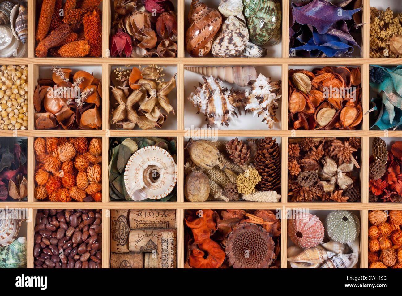 Arti & Mestieri - hobby per la realizzazione di immagini viene visualizzata di conchiglie, fiori secchi, semi, i tappi di sughero ecc. Immagini Stock