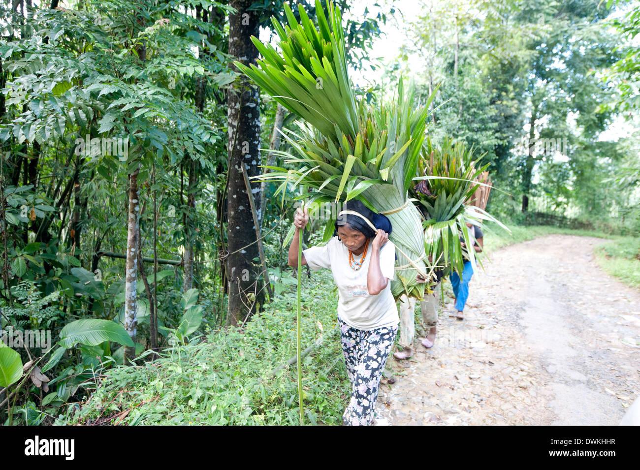 Naga tribeswomen che trasportano carichi di ventola di foglie di palma per uso domestico in paglia, sui tradizionali stringitesta, rurale Nagaland, India, Asia Immagini Stock
