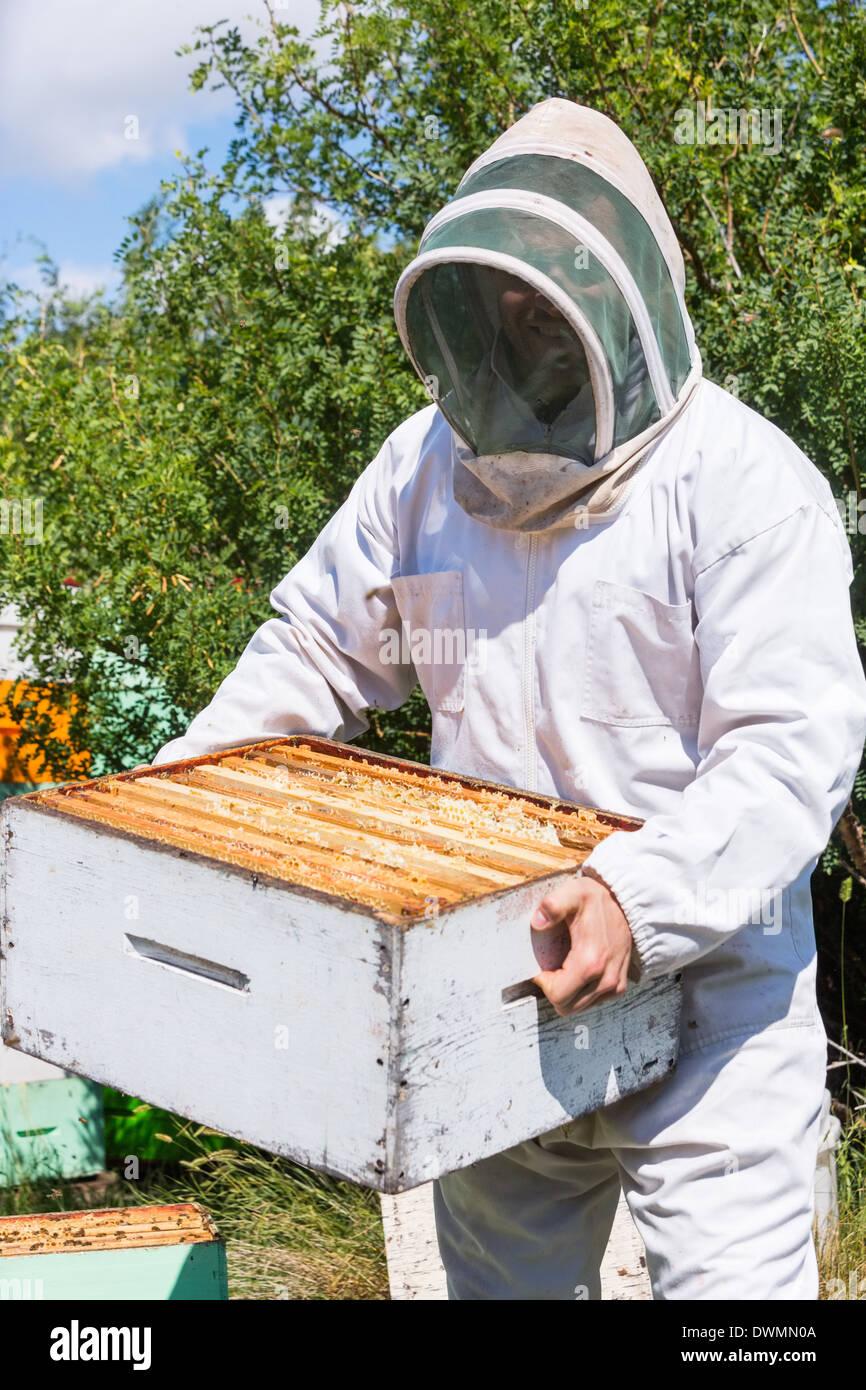 Apicoltore maschio portando scatola di nido d'ape a Apiario Foto Stock