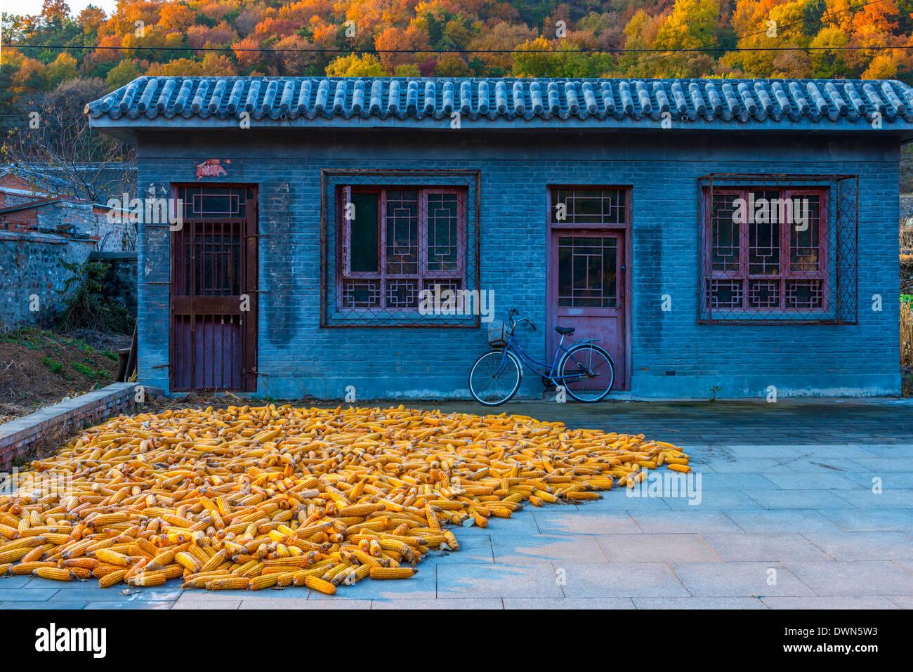 Mais (mais) essiccazione, Gubeikou, Contea di Miyun, Municipalità di Pechino, Cina, Asia Immagini Stock