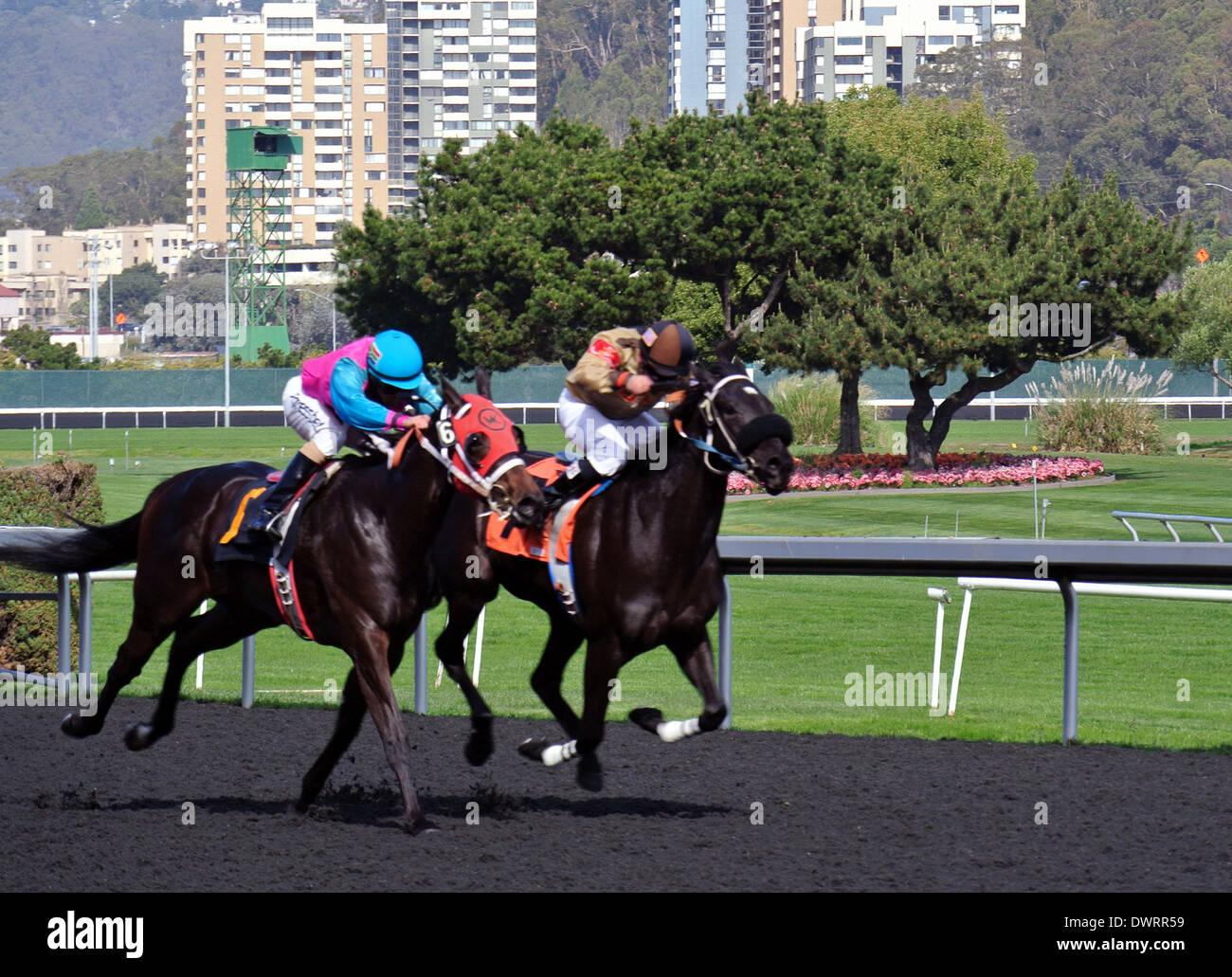 Due fantini ride mano loro purosangue cavalli da corsa sulla linea del traguardo in una Golden Gate campi cavallo di razza Immagini Stock