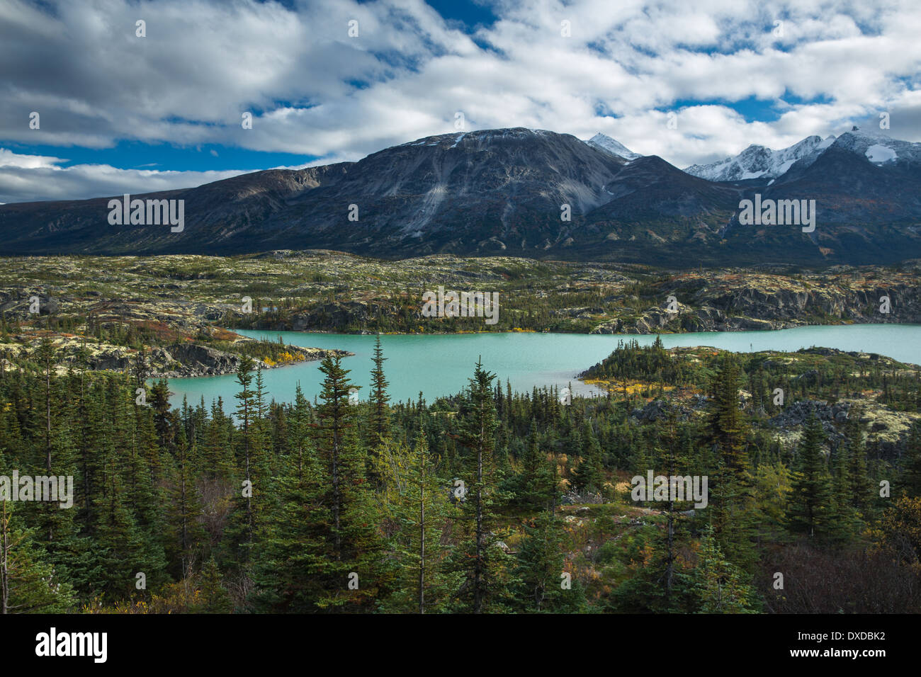 I prati alpini intorno Fraser, Sud Klondike Highway, British Columbia, Canada Immagini Stock