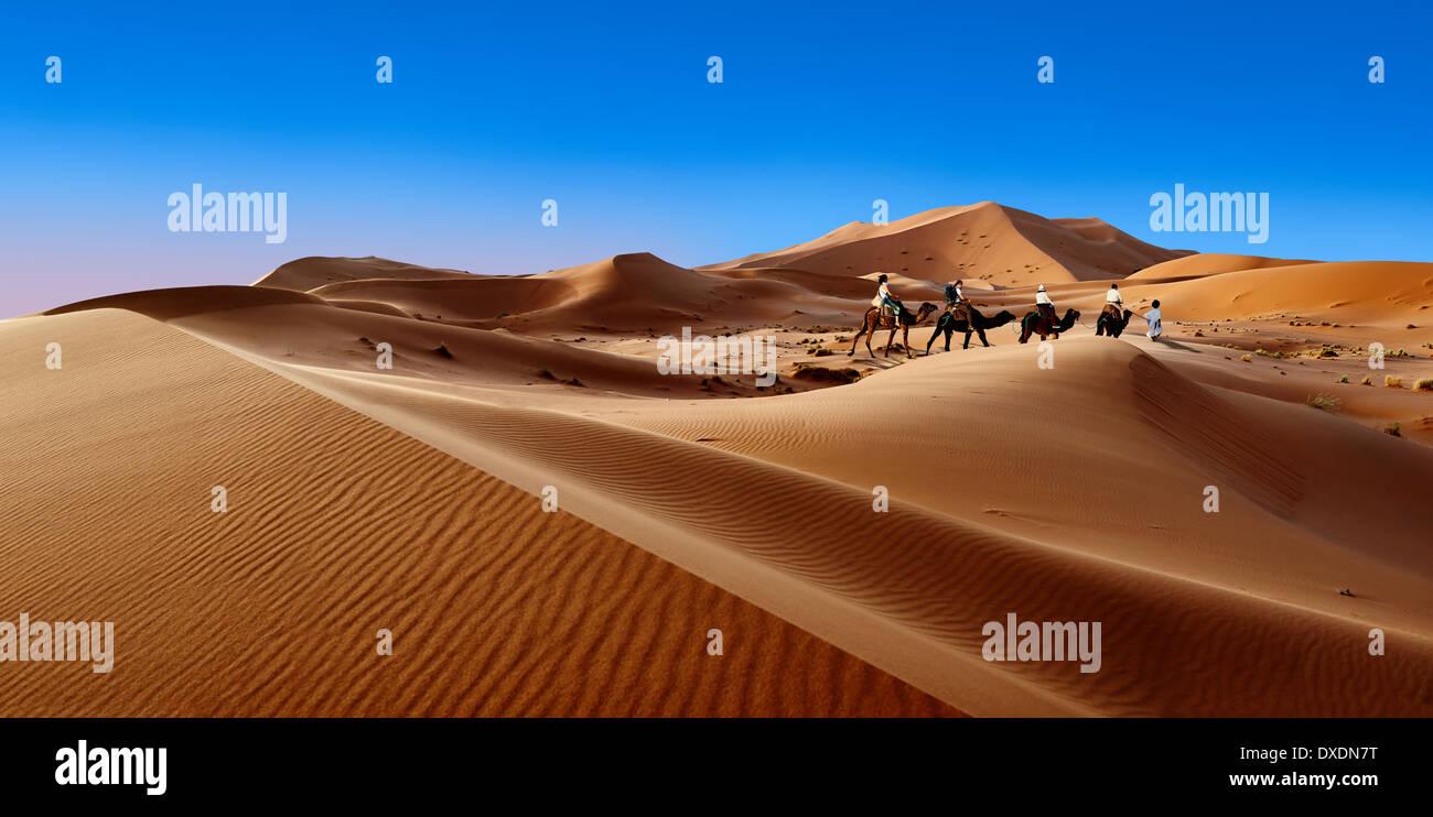 Giri in cammello sul Sahara dune di sabbia di Erg Chebbi Marocco Foto Stock