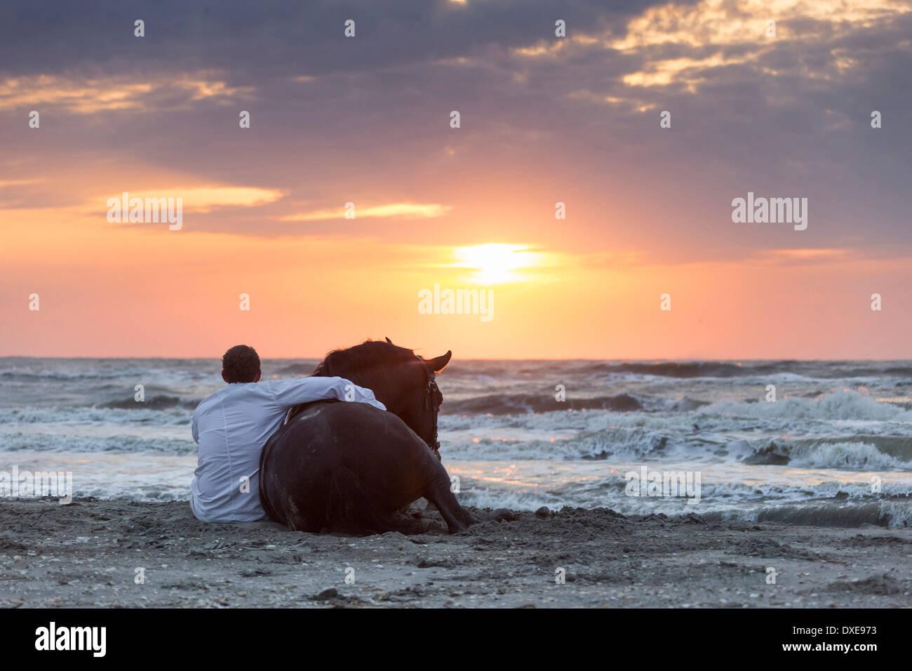 Puro Cavallo Spagnolo andaluso. Stuntman Vali Vasilescu con bay stallone seduto su una spiaggia al tramonto. La Romania Immagini Stock