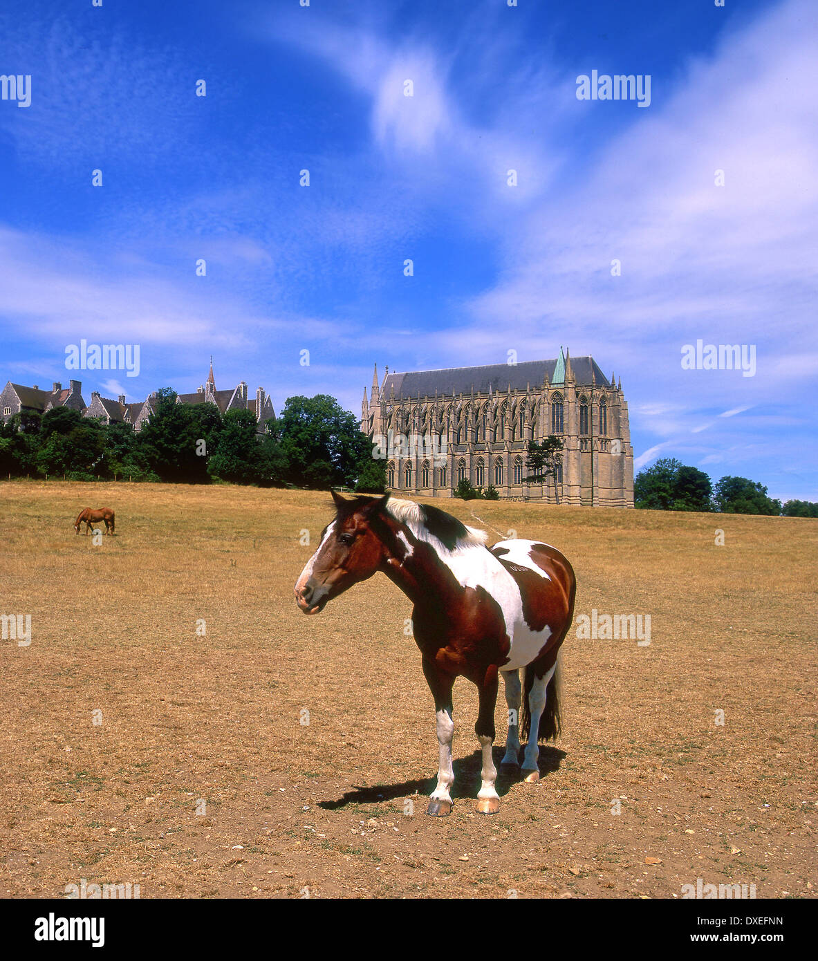 Horse neart Lancing college chapel, West Sussex Foto Stock