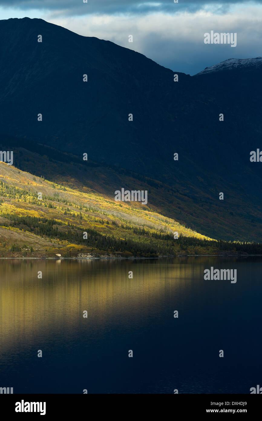 Un albero in ritardo di sole sul lago Tutshi, British Columbia, Canada Immagini Stock