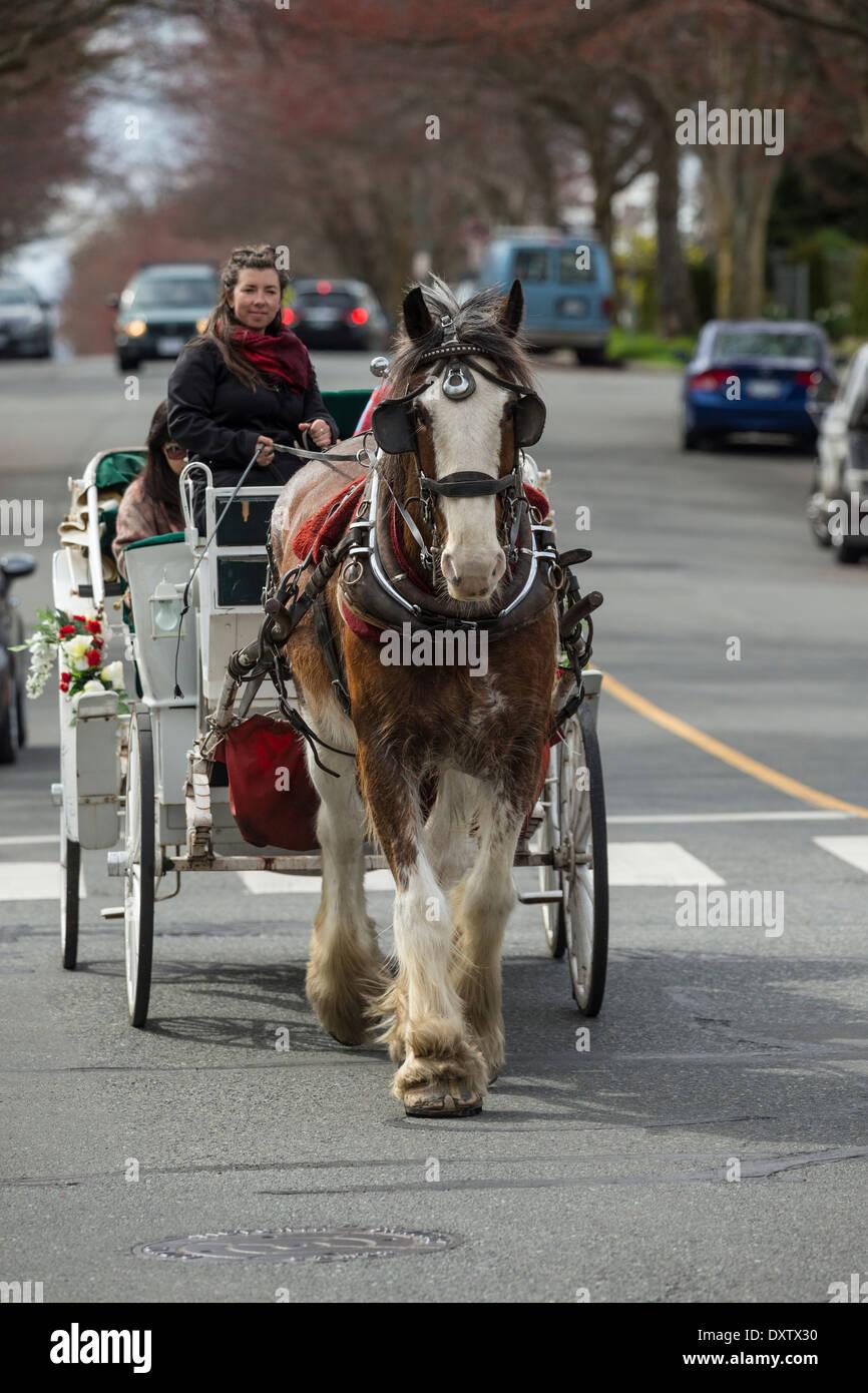 Cavallo e Carrozza turistica scendendo Oswego street-Victoria, British Columbia, Canada. Immagini Stock