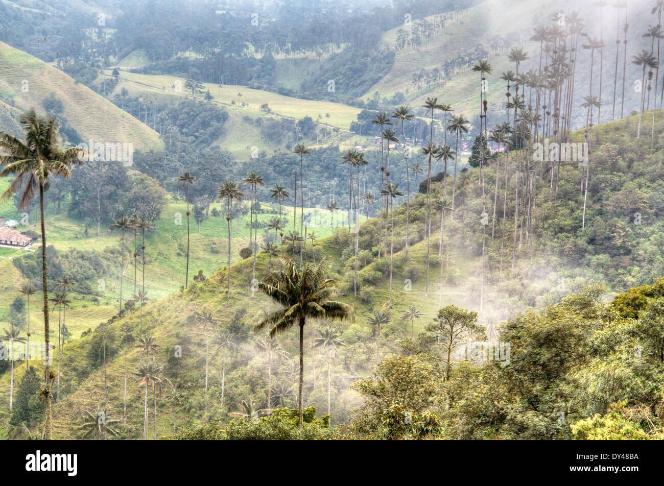 La valle del Cocora nei pressi di Salento, Colombia Immagini Stock