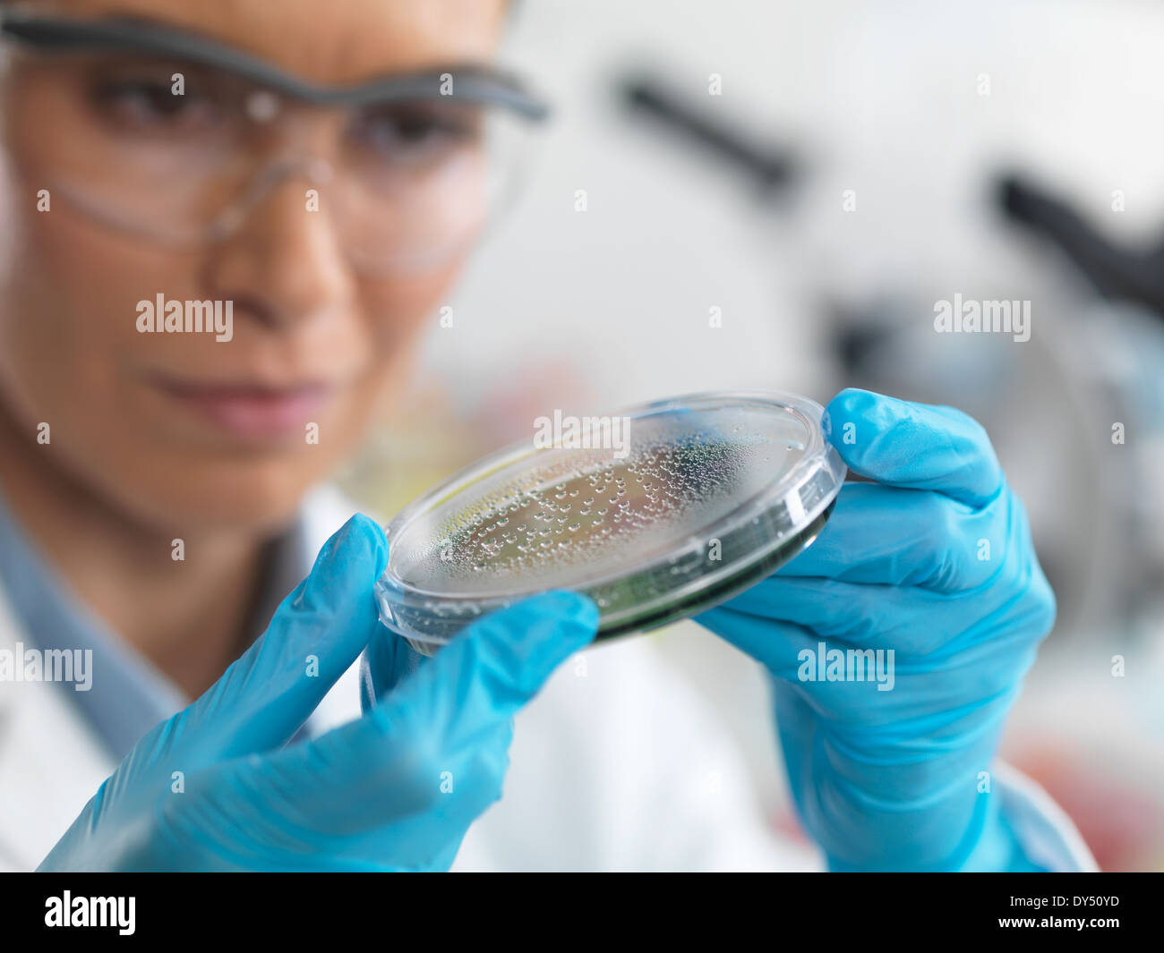 Donna scienziato esaminando i microrganismi in capsula di petri Foto Stock