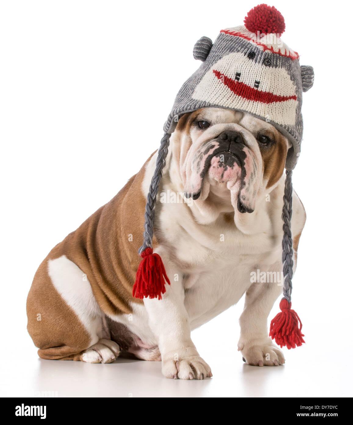 Cane indossando Cappello invernale Foto   Immagine Stock  68391440 ... d6d34d8a12f6