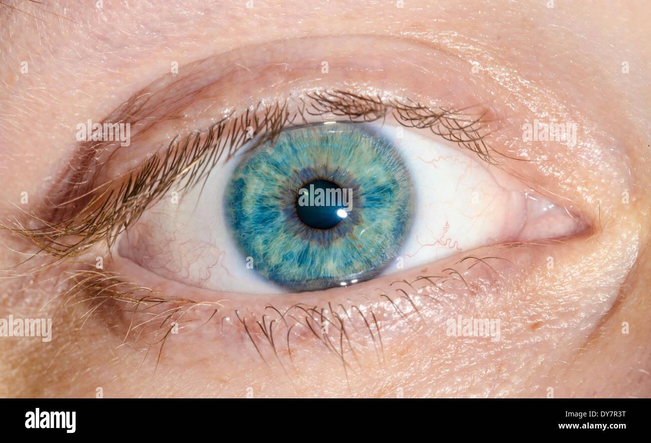 La visione di concetto. Maschio macro occhio. Immagini Stock