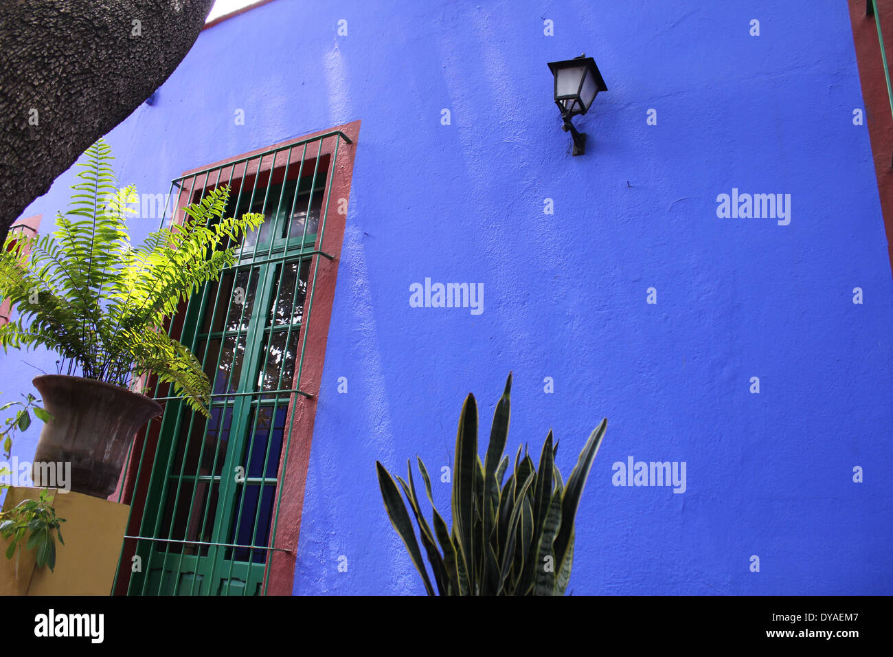 Pareti Esterne Casa : Blue pareti esterne con finestra e piante blue house frida