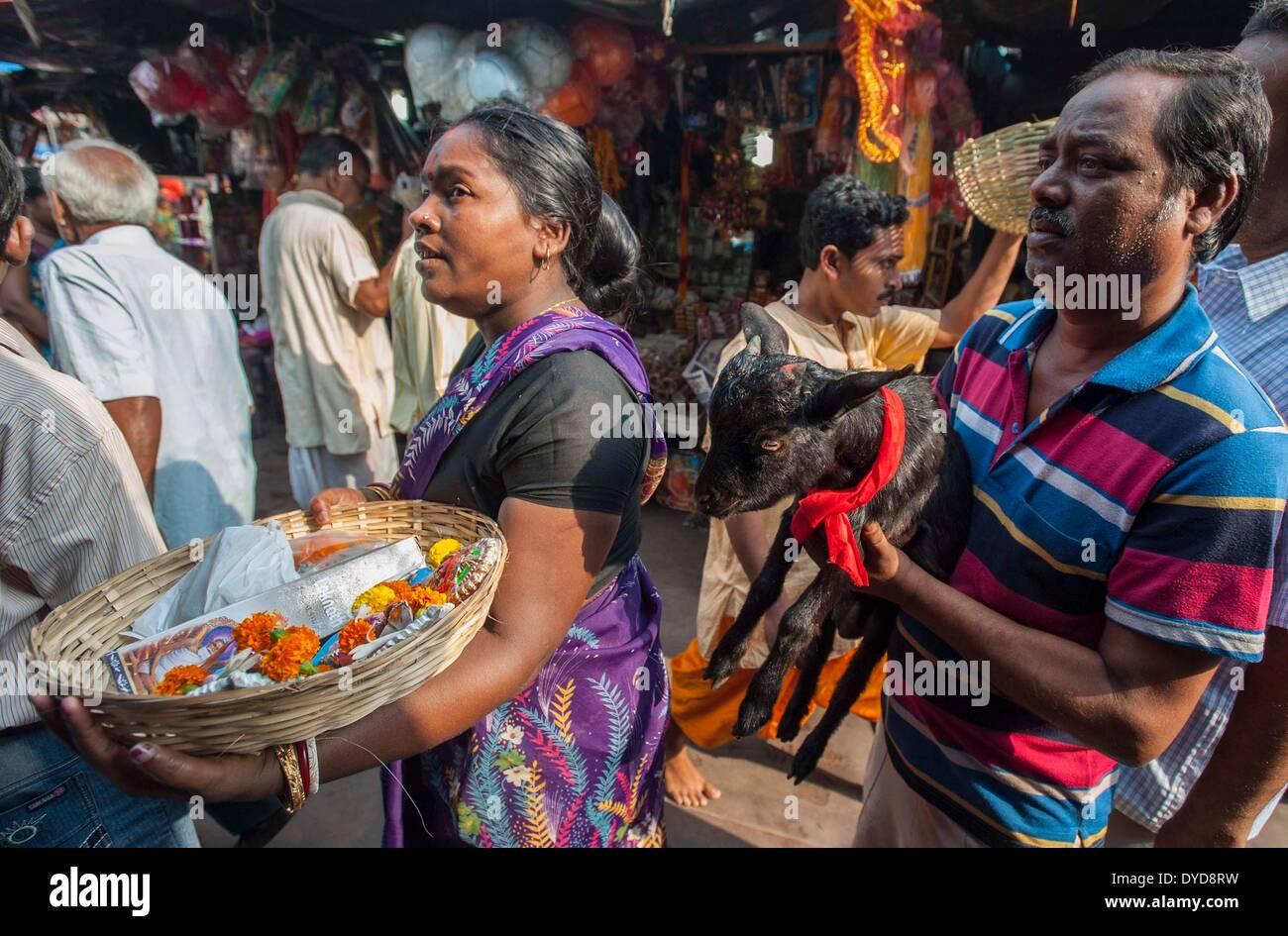 Calcutta, lo stato indiano del Bengala Occidentale. 15 apr 2014. Un devoto indiano porta un capro per il sacrificio su 'Poila Baishakh' in Calcutta, capitale dell'est lo stato indiano del Bengala Occidentale, 15 aprile 2014. Poila Baishakh, il primo giorno del calendario Bengali anno, è l'inizio di tutte le attività aziendali nel Bengala occidentale quando i commercianti culto del Signore Ganesha e la dea Lakshmi per contrassegnare l'anno con la ricchezza e la prosperità. © Tumpa Mondal/Xinhua/Alamy Live News Immagini Stock