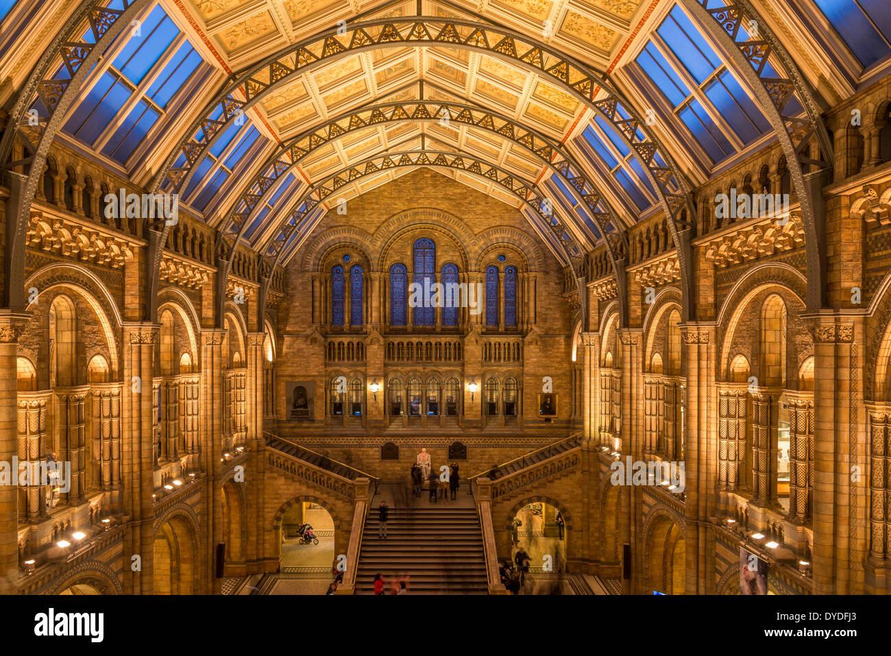 La sala centrale nel Museo di Storia Naturale di Londra. Immagini Stock