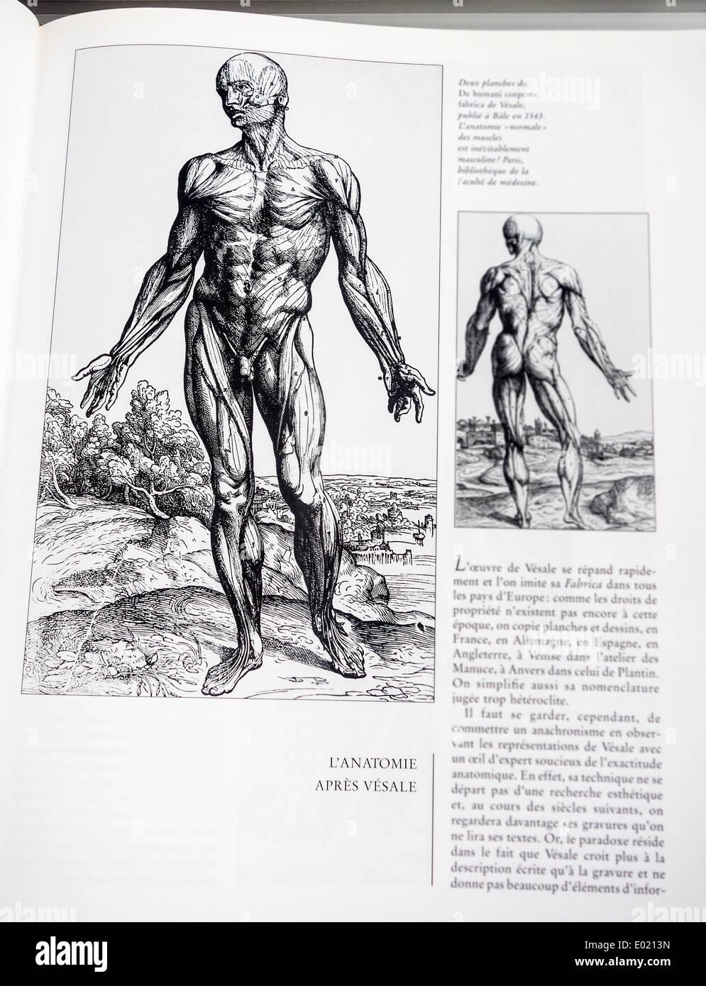 Prenota con illustrazioni dettagliate su anatomia umana, De humani corporis fabrica da anatomista belga Andreas Vesalius Immagini Stock