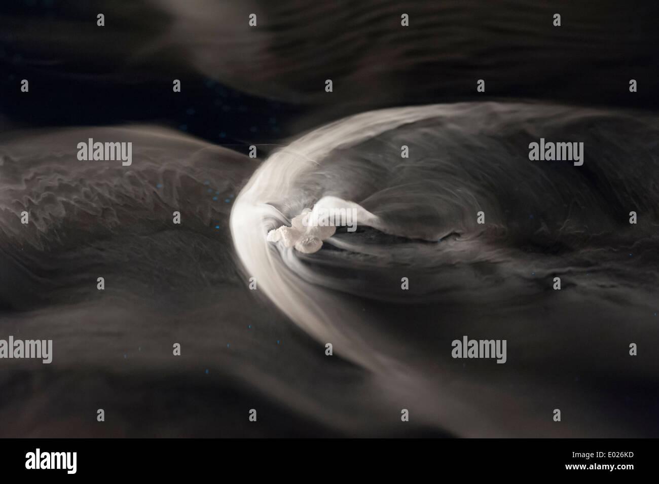 Un piccolo (1 cm) di grandi dimensioni pezzo di solidi congelati di neve di anidride carbonica è flottante su una superficie di acqua mentre è evaporare. Immagini Stock