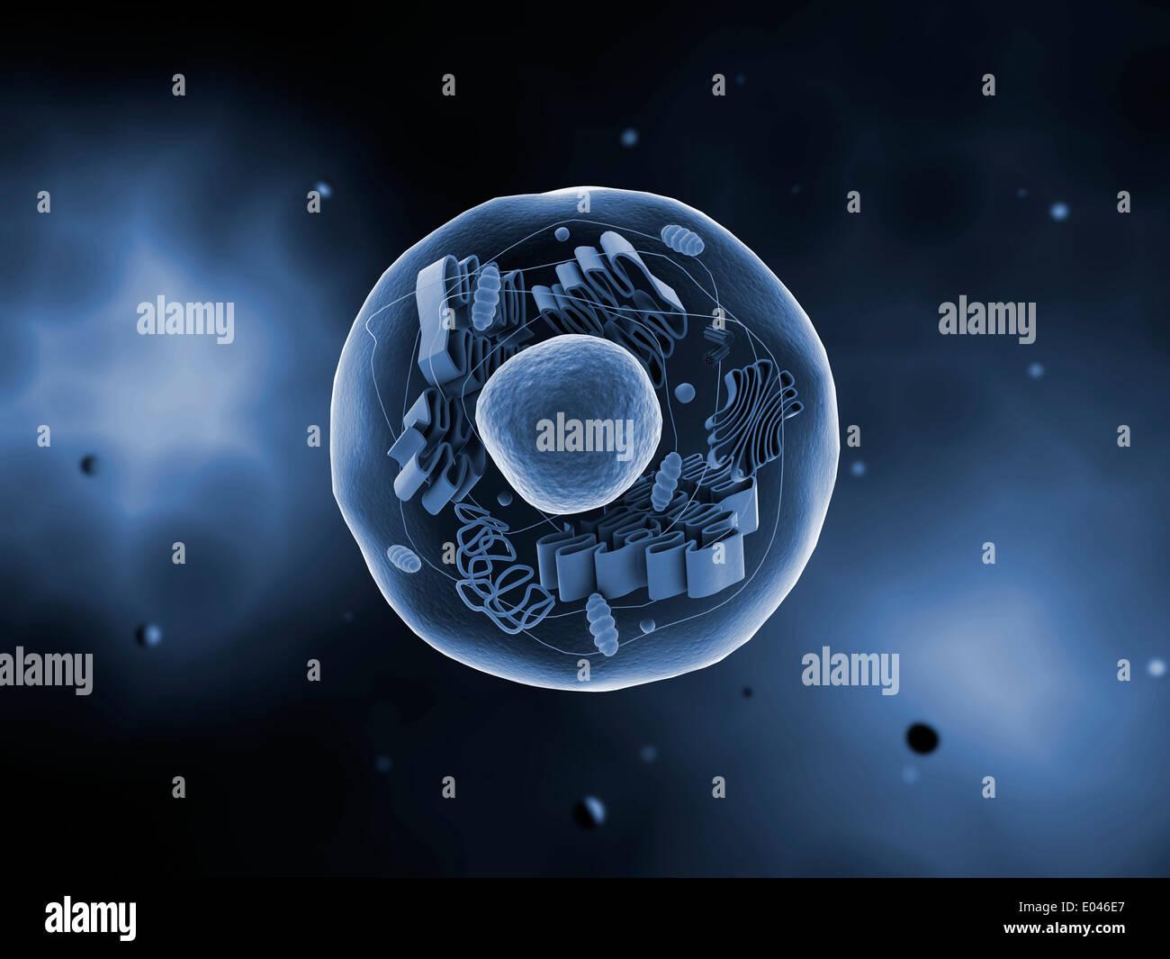 Vista microscopica della cellula animale. Immagini Stock