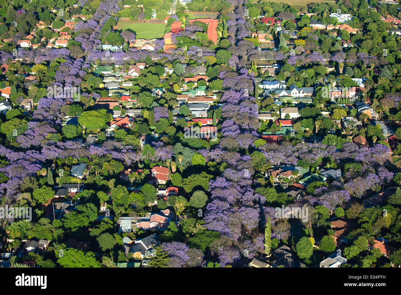 Vista aerea di alberi di jacaranda in fiore,sobborghi di Johannesburg, il che la rende una delle città più verdi del mondo.Sud Africa Immagini Stock