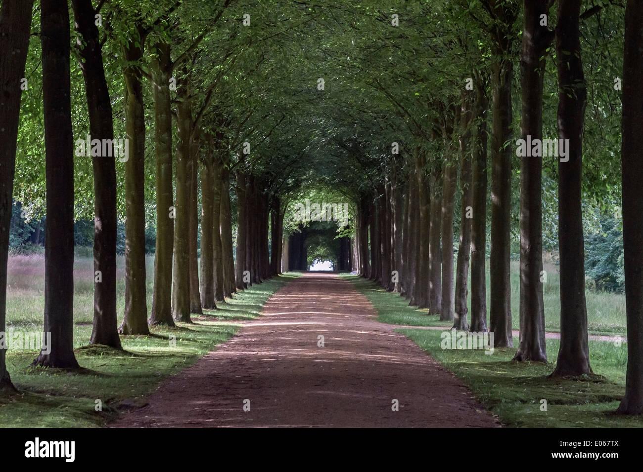 Tunnel di alberi, Fredensborg Palace, Danimarca Foto Stock