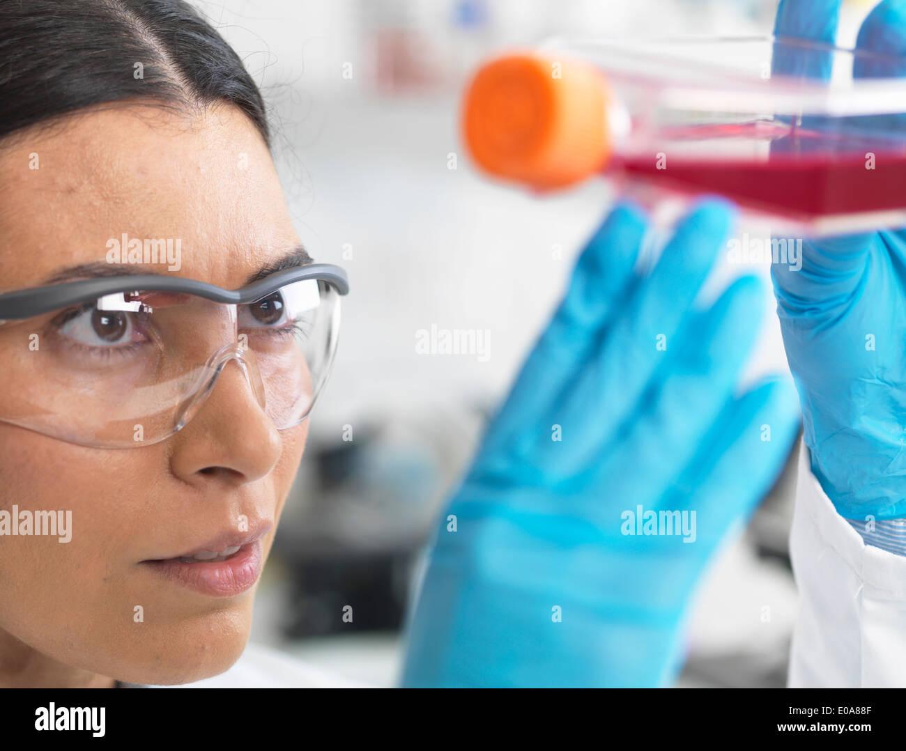Chiusura del biologo cella tenendo un pallone contenente cellule staminali, coltivato in rosso medium di crescita, per studiare la malattia Immagini Stock