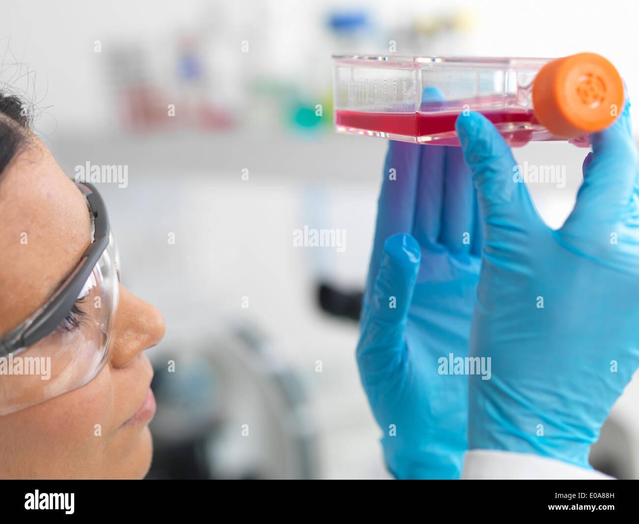Close up di cella femmina biologo tenendo un pallone contenente cellule staminali, coltivato in rosso medium di crescita, per studiare la malattia Immagini Stock