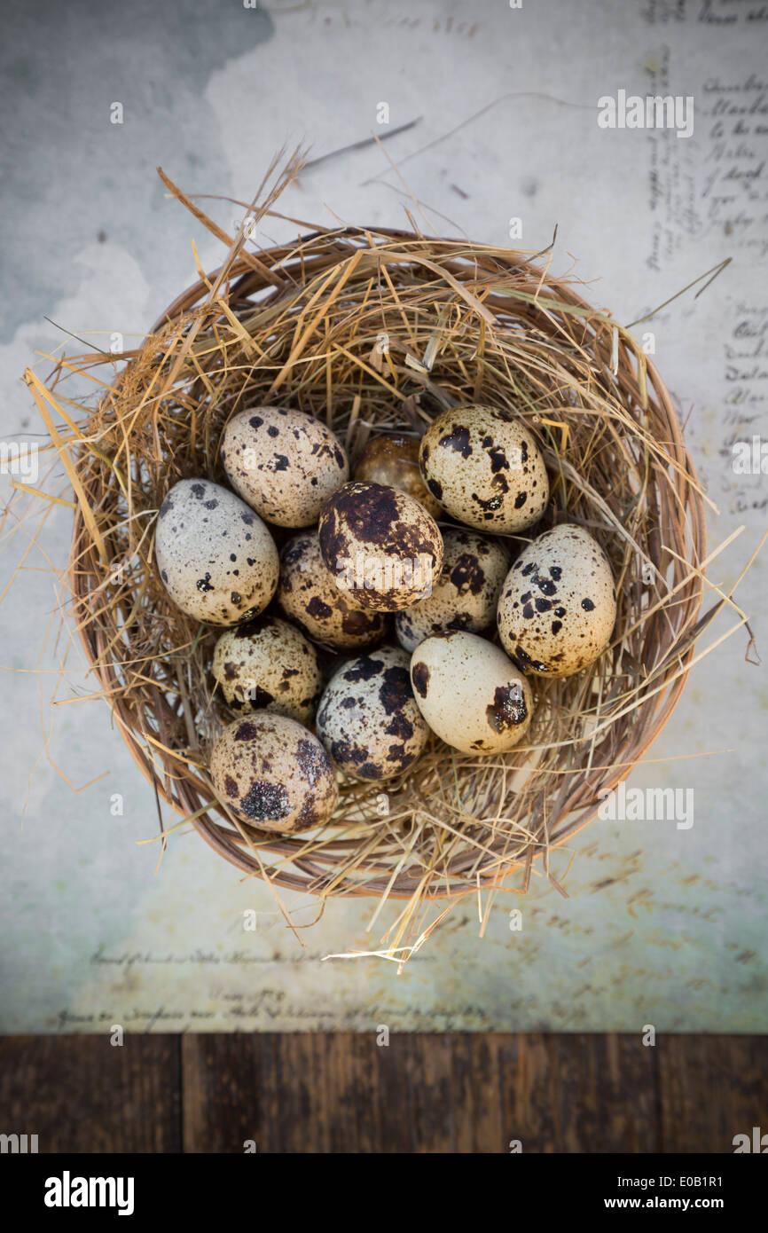 Nido di uova di quaglia su carta con la scrittura, vista in elevazione Immagini Stock