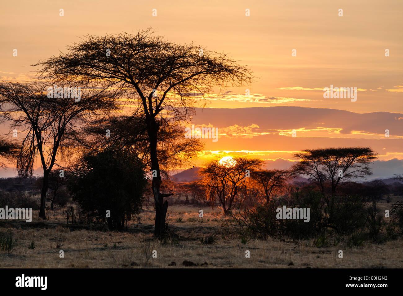 Sunrise nel Ruaha National Park, acacie, Tanzania, Africa orientale, Africa Immagini Stock