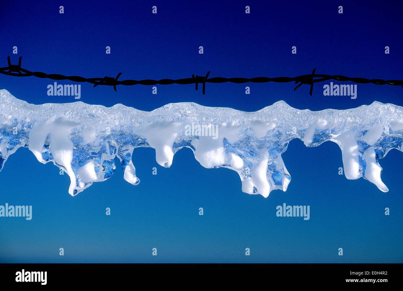 Il ghiaccio congelato sul filo spinato Immagini Stock