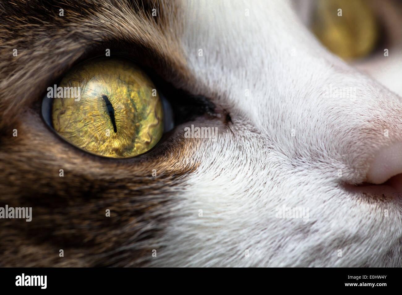 Katzenblick - Cat lo sguardo Immagini Stock