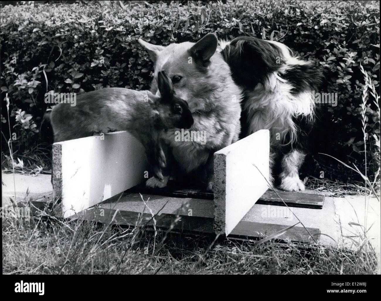 Febbraio 25, 2012 - Eseguire il coniglio ! Maryanne stadi a 'Greyhound' gara per divertire Buster il Corgie e Jess. ne P Foto Stock