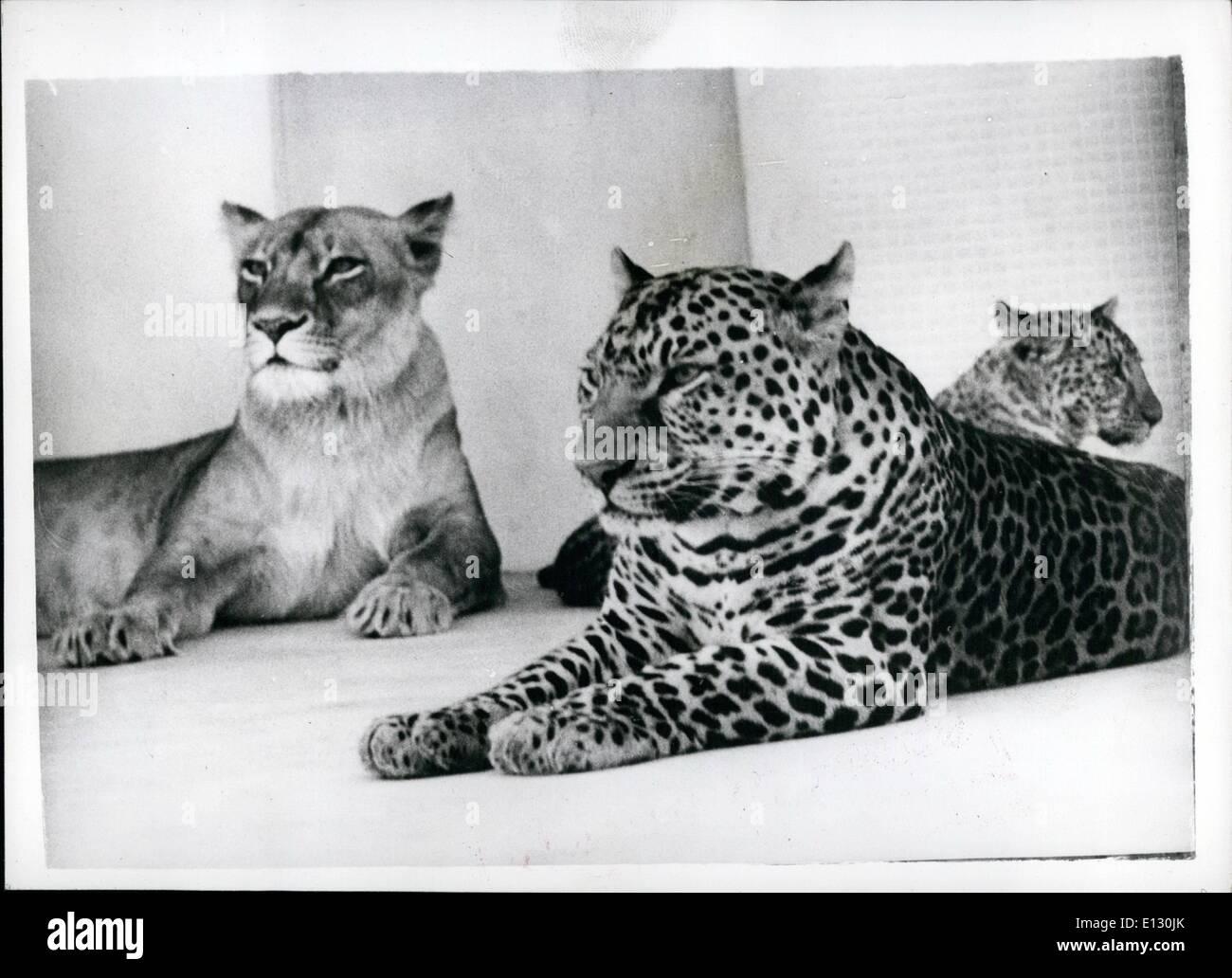 Febbraio 26, 2012 - Il mondo solo ''Leopons'' crescono. Prole rare presso lo zoo di giapponese.: il 190 giorno vecchio ''Leopon'' cubs metà leopardo e metà lion nato al Hanshin Park Zoo, vicino a Kobe, in Giappone stanno crescendo in bella animali. Il loro padre è un Leopard e la madre una leonessa sono un maschio e una femmina e mentre la femmina può salire la struttura ad albero nella gabbia il maschio non è in grado di fare in modo che egli è piuttosto più goffo. Il rivestimento della femmina è sempre più leggero mentre quello dei maschi più scuro Immagini Stock