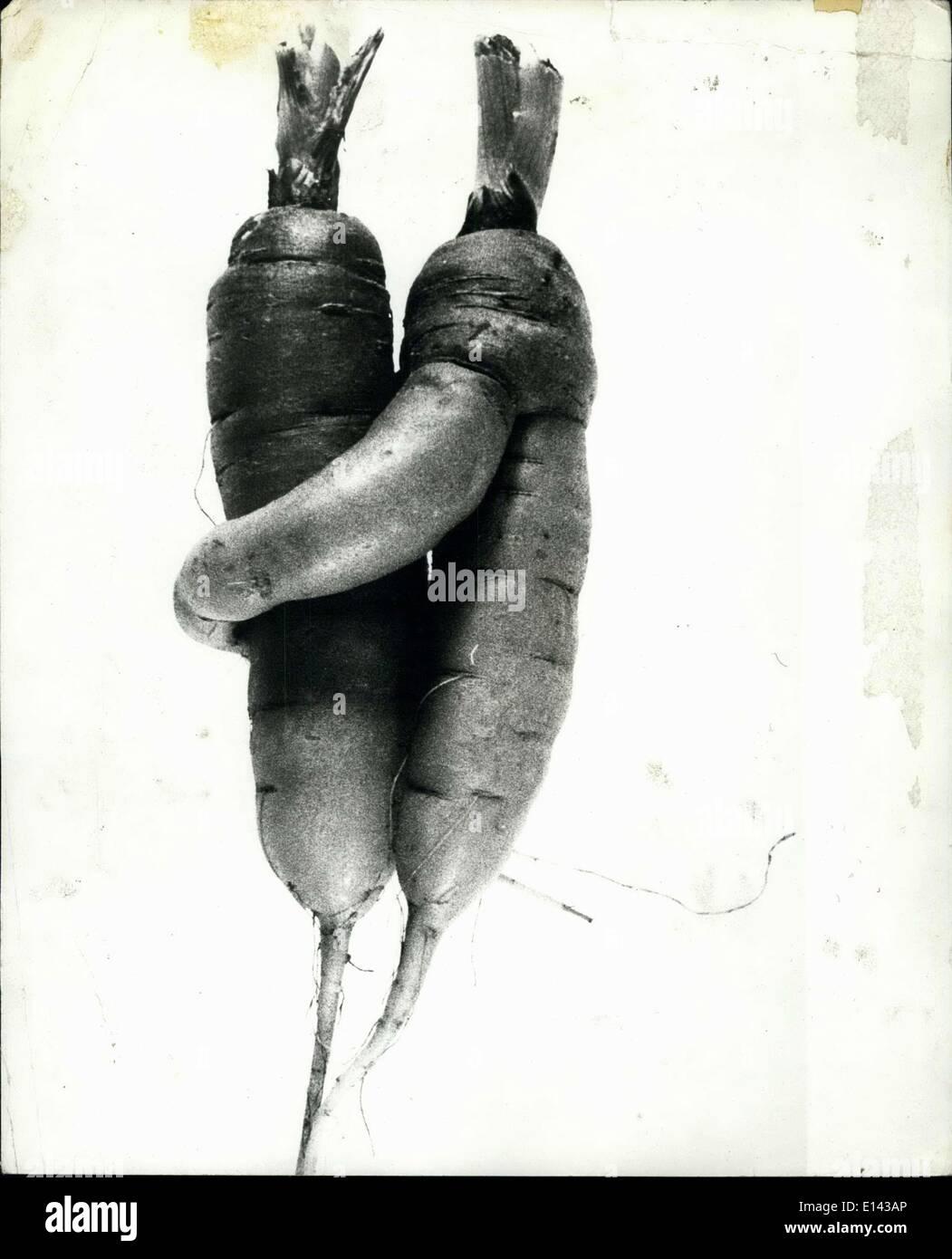 Apr. 04, 2012 - Carote nell'amore. Essa può essere solo la natura poco scherzo ma questi due carote scavato recentemente in Svizzera davvero sembrano caduti per ogni altro in un grande modo. Forse verrà loro che necessitano di una carota 24 anello di nozze. Immagini Stock