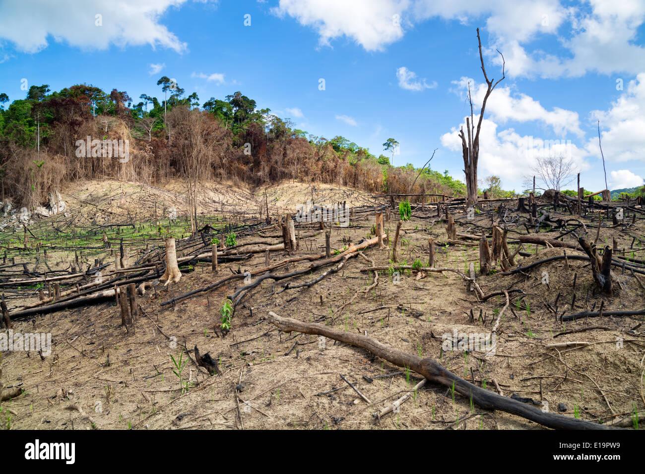 La deforestazione in El Nido, Palawan - Filippine Immagini Stock