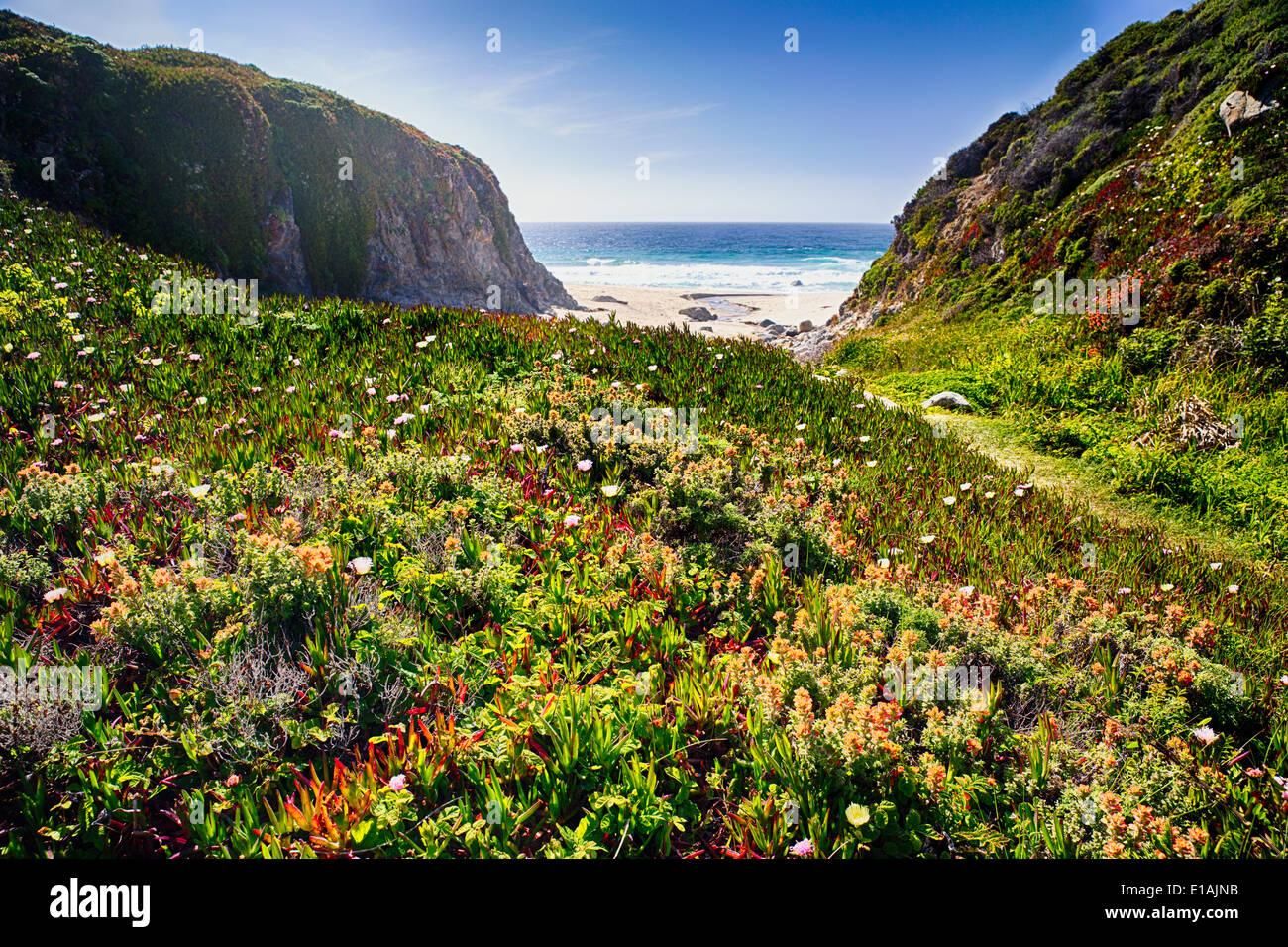 LowAngle vista di un prato costiere con rigogliosi fiori selvatici, Graapate parco statale, Big Sur, California Immagini Stock