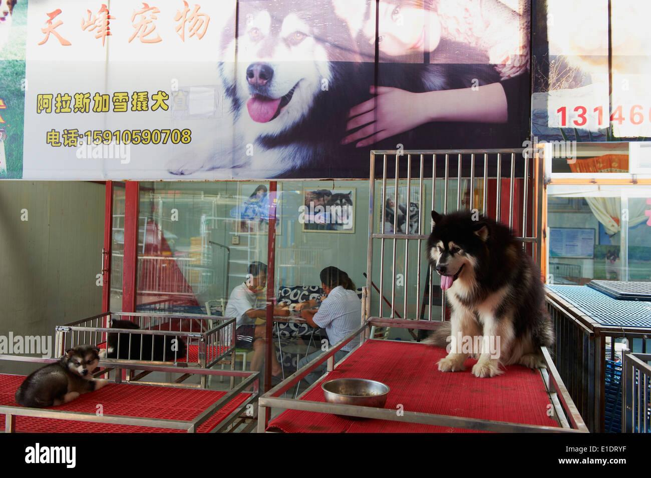 Cina, Pechino, cane e gatto mercato di Dong Feng Xin Immagini Stock