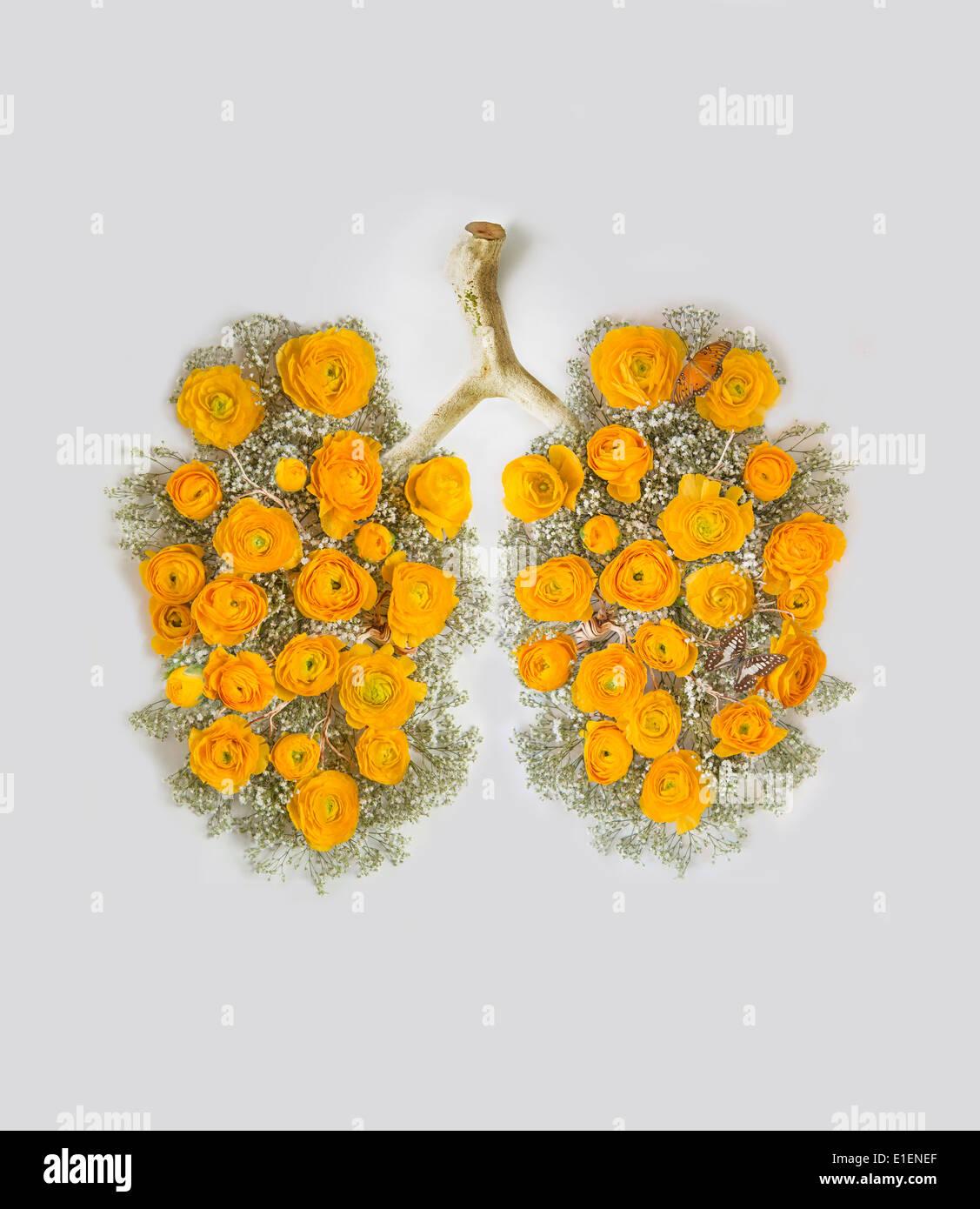 Pulire i polmoni con fiori di colore giallo Immagini Stock