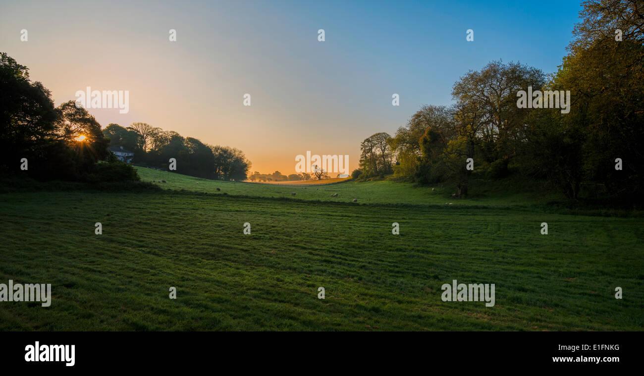Campagna all'alba nel Devon. Durante l'estate. A ovest di Inghilterra England Regno Unito Immagini Stock