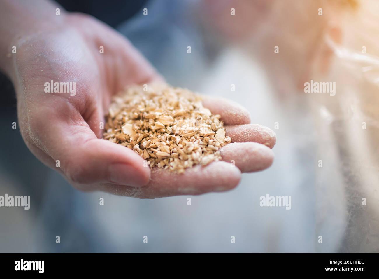 Close up dei maschi di mano che regge due fila di grano a casa birra brew Immagini Stock