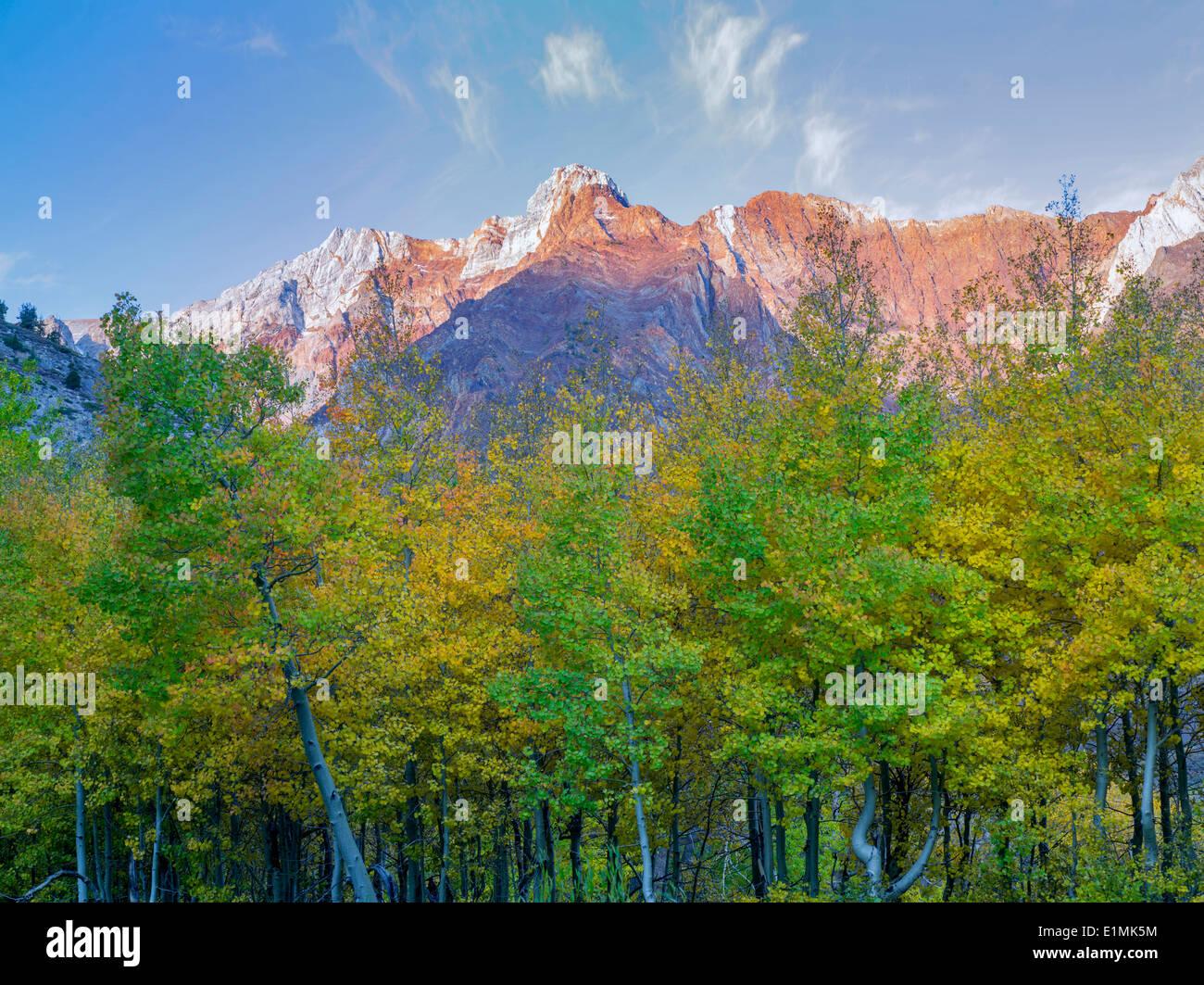 Caduta di aspen colorati alberi e Eastern Sierra Nevada vicino a McGee Cree, California Immagini Stock