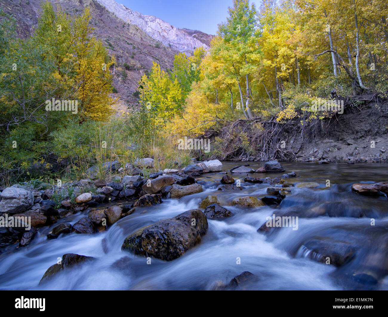 Mcgee Creek e caduta aspens colorati, Inyo National Forest, Eastern Sierra Nevada, in California Immagini Stock